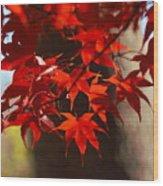 Japanese Maple Leaves Wood Print