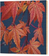 Japanese Maple Leaves In Autumn Wood Print