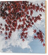 Japanese Maple Red Lace - Horizontal View Downwards Right Wood Print