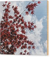 Japanese Maple Red Lace - Vertical Up Right Wood Print