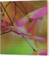 Japanese Maple Seedlings Wood Print
