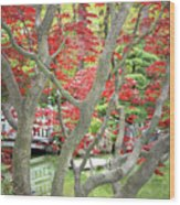 Japanese Maple Tree And Pond Wood Print