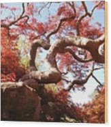 Japanese Maple Tree In Spring Wood Print
