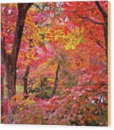 Japanese Maple Trees Wood Print by I love Photo and Apple.