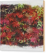 Japanese Maple Under The Willow Wood Print
