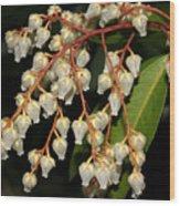 Japanese Pieris 2011-1 Wood Print