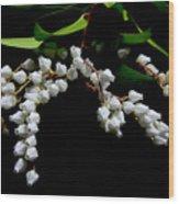 Japanese Pieris 2011-3 Wood Print