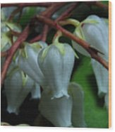 Japanese Pieris 2011-4 Wood Print