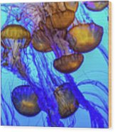 Japanese Sea Nettles Wood Print