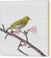Japanese White Eye Wood Print