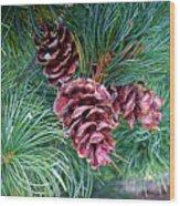 Japanese White Pine Pinecones Wood Print