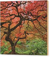 Japenese Garden, Portland Wood Print