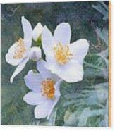Jasmin Flower Wood Print