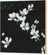 Jasmine Cascading Across The Scene Wood Print