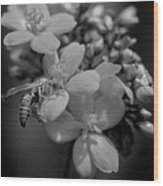 Jatropha Blossoms Wasp Painted Bw Wood Print