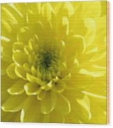 Yellow Luminosity  Wood Print