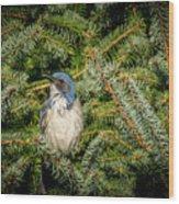 Jay In Tree Wood Print