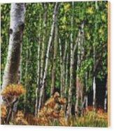 Jebediah Smith Wilderness Walk 2016 Wood Print