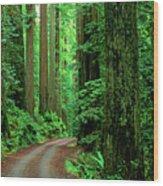 Jedediah Smith Redwoods                            Wood Print