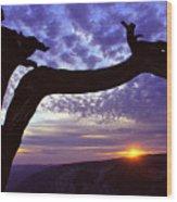 Jeffrey Pine Sentinel Dome Wood Print by Alan Lenk