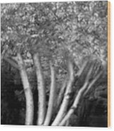 Jelks Fingerling 1 Wood Print