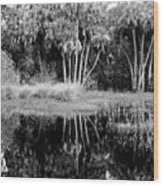 Jelks View Wood Print