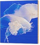 Jellies In Jellyfish Tank In Monterey Aquarium-california Wood Print