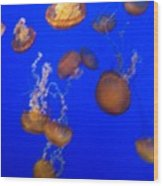 Jelly Fish 2 Wood Print