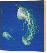 Jelly Fish In Bahamas Wood Print