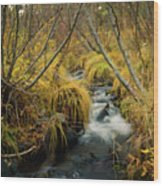 Jenny Creek In Autumn Wood Print