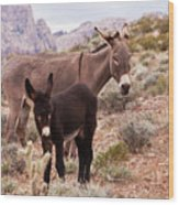Jennys Foal Wood Print