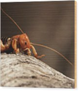 Jerusalem Cricket On Textured Log Wood Print