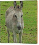 Jerusalem Donkey On A Farm Wood Print