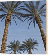 Jerusalem Palms Wood Print