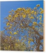 Jerusalem Thorn Tree Wood Print