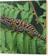 Jeweled Chameleon Furcifer Lateralis Wood Print