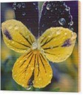 Jewelled Pansy Wood Print