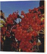 Jewels Of Autumn 4 Wood Print