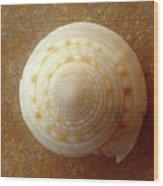 Jewels Of The Sea - Tiger's Eye Swirl Wood Print