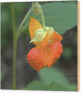 Jewelweed Wood Print