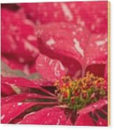 Jingle Bells 3 Poinsettia Wood Print