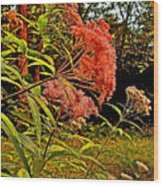 Joe-pye-weed Near Schroon River In New York Wood Print