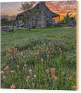 John P Coles Cabin And Spring Wildflowers At Independence - Old Baylor Park Brenham Texas Wood Print
