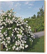 John Wingate Weeks Estate - Lancaster New Hampshire Wood Print