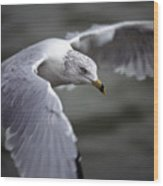 Johnathan Livingston Seagull Wood Print