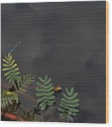 Joint Vetch With Dragon Fly Wood Print