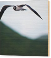 Jonathon Livingston Seagull Wood Print