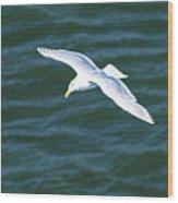Jonothan Livingston Birdie Wood Print