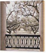 Josephine's View Of Oak Alley Plantation Wood Print