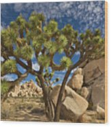 Joshua Tree And Blue Sky Wood Print